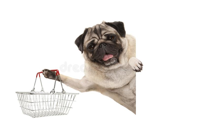 愉快的微笑的哈巴狗小狗,阻止导线金属手提篮,在白色横幅后 库存照片