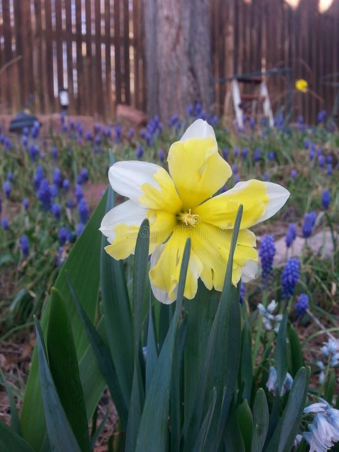 愉快的春天 库存照片
