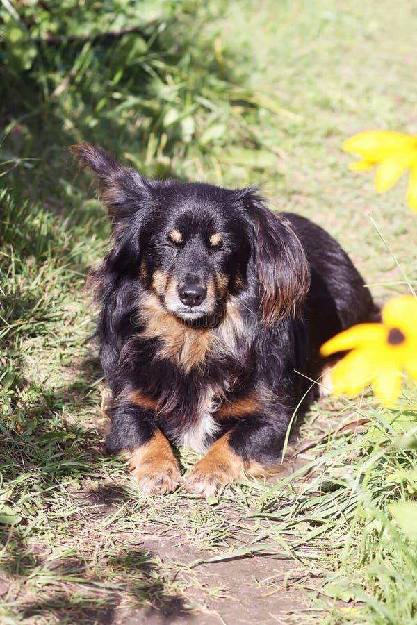 愉快的杂种mixed-breed狗户外在草在一个晴朗的夏日 库存图片
