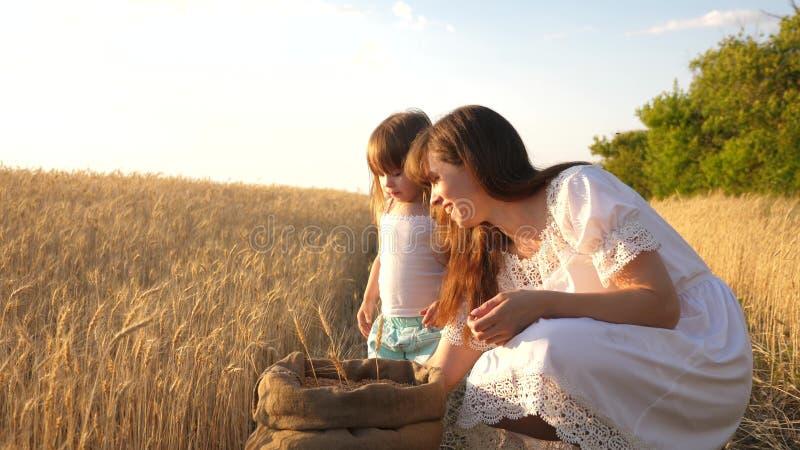 愉快的母亲农夫使用与一点儿子,领域的女儿 母亲和小孩使用与在a的五谷 图库摄影