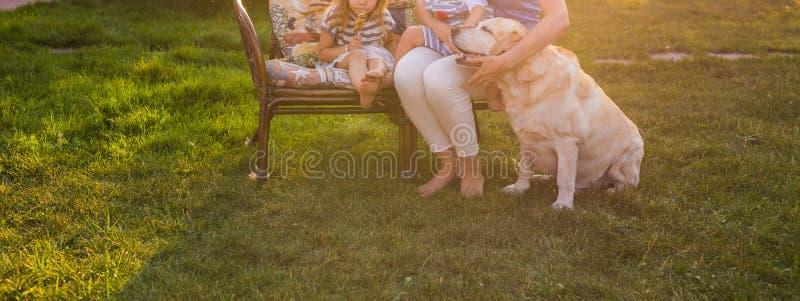 愉快的母亲和两个孩子有金毛猎犬狗的在庭院里,特写镜头 免版税库存图片