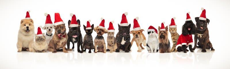 愉快的气喘圣诞老人猫和的狗,当坐和站立时 免版税库存图片