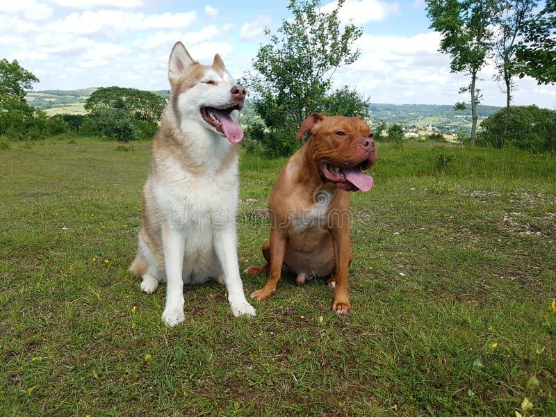 愉快的爱斯基摩和大型猛犬在乡下坐 免版税库存图片