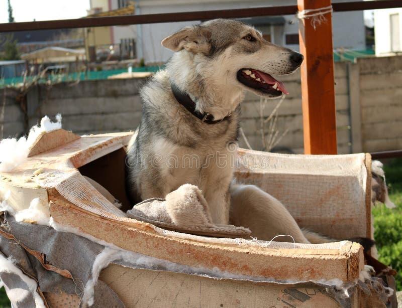 愉快的狗和鞋子 免版税库存照片