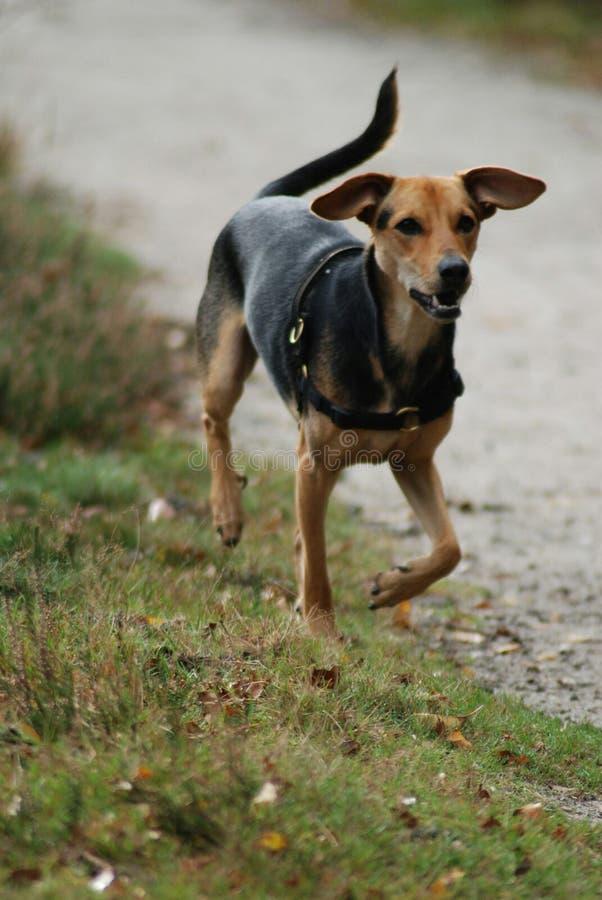 愉快的狗在一好天儿 免版税库存图片