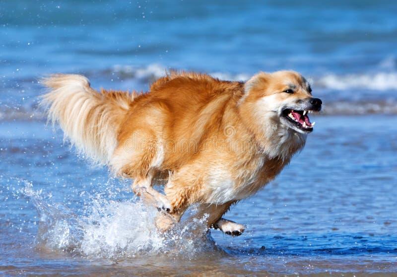 愉快的猎狗 库存照片
