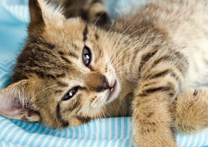 愉快的猫 免版税库存照片