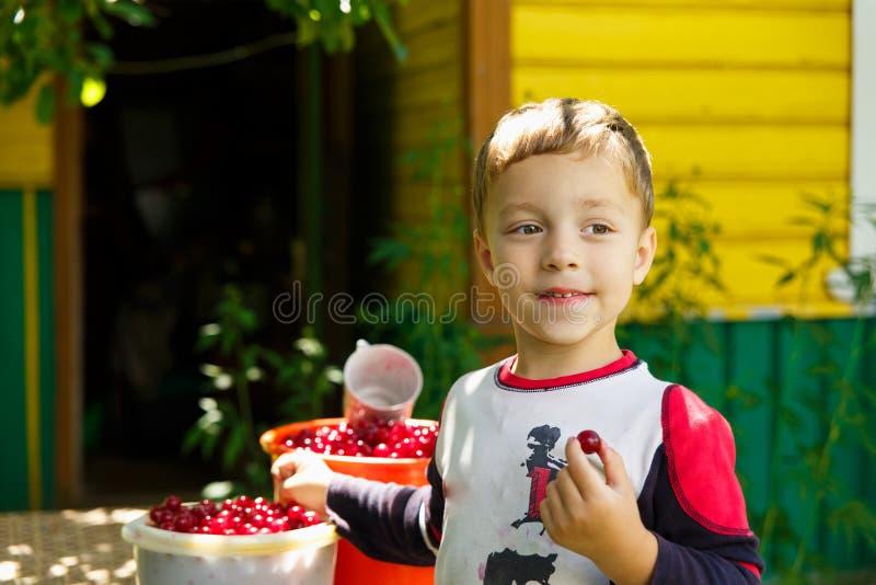 愉快的男孩吃新近地被采摘的樱桃 免版税库存照片