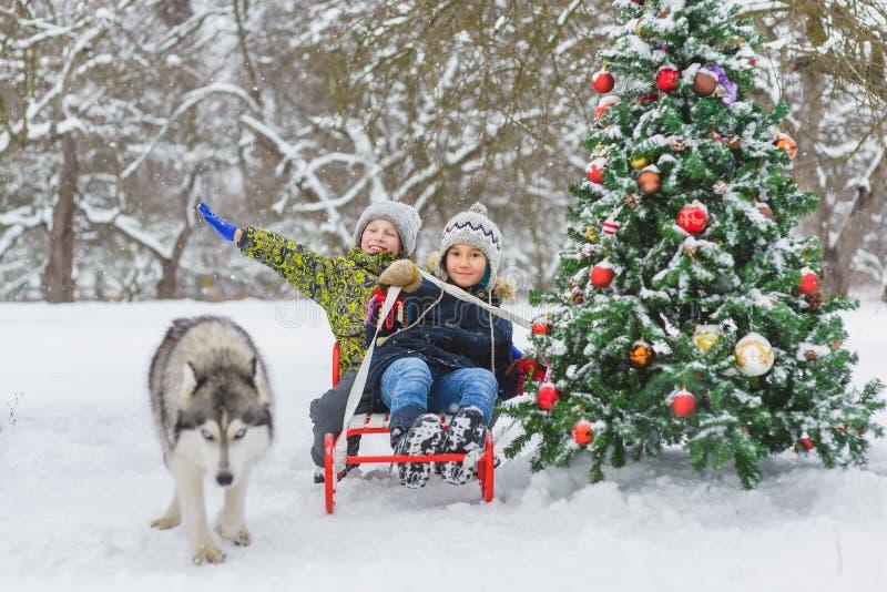 愉快的男孩sledding在圣诞树和狗附近在室外的冬日 免版税库存图片