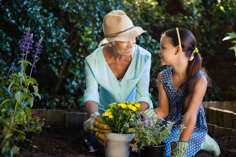 愉快的种植花盆的祖母和孙女 免版税图库摄影