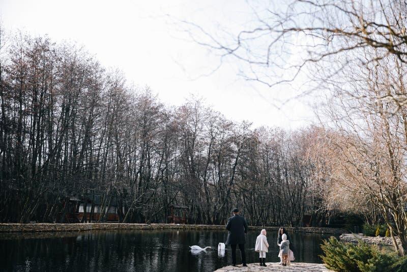 愉快的美丽的家庭哺养的天鹅和走由湖在秋天天 库存图片