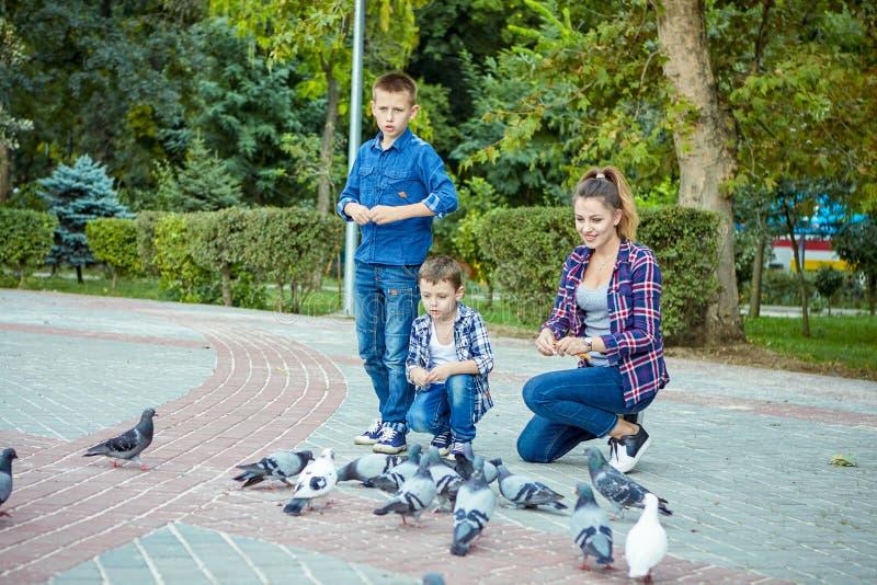 愉快的美丽的母亲和两个儿子喂养了鸽子 免版税库存图片