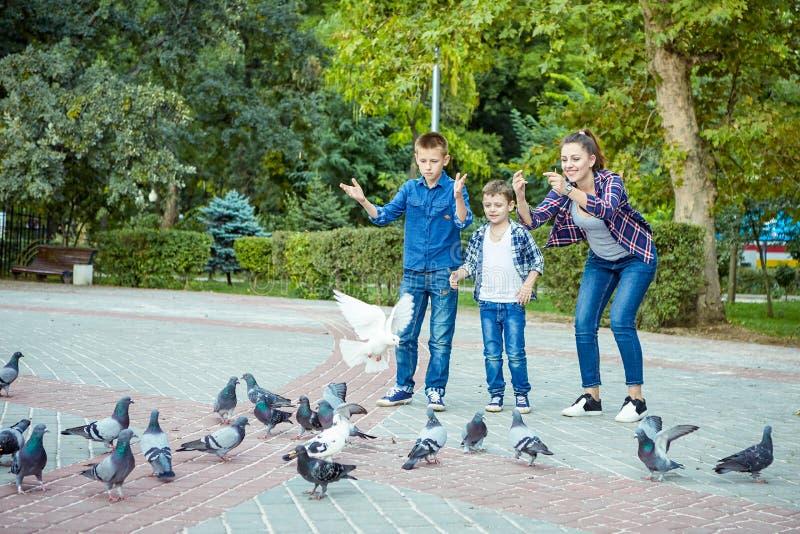愉快的美丽的母亲和两个儿子喂养了鸽子 免版税库存照片