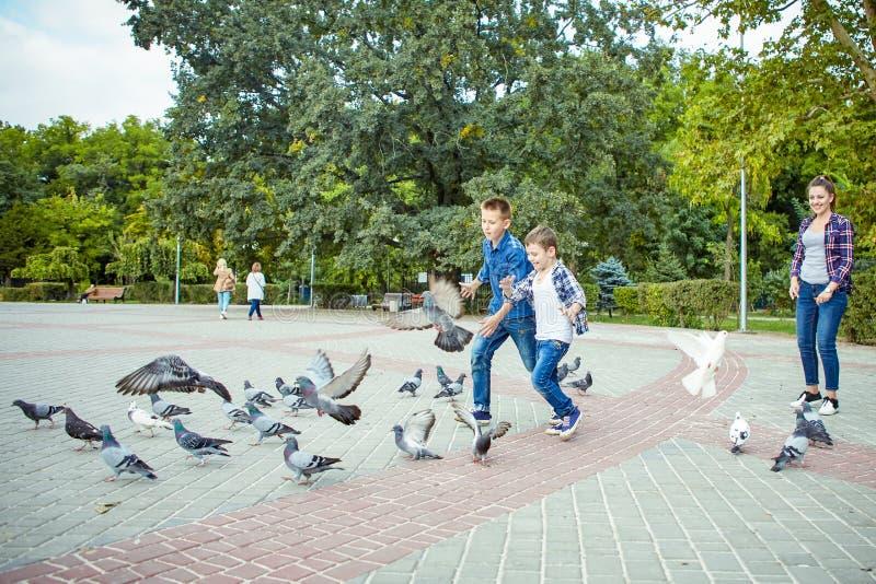愉快的美丽的母亲和两个儿子喂养了鸽子 库存图片