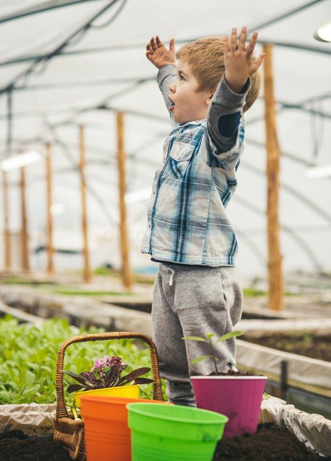 愉快的花匠 愉快的花匠一点 愉快的花匠用被举的手自温室 愉快的花匠看看他的工作 免版税库存图片
