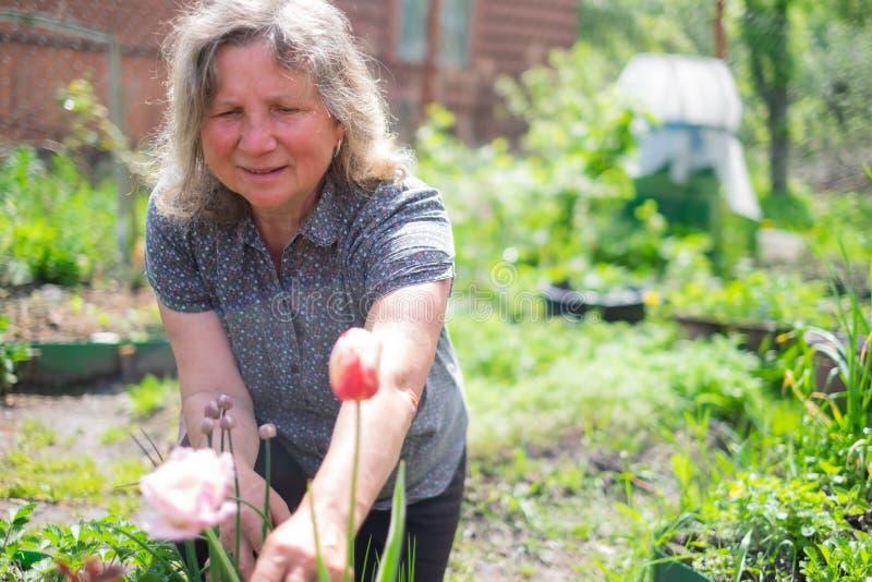 愉快的资深白种人妇女与开花在夏天庭院的花一起使用 免版税库存照片