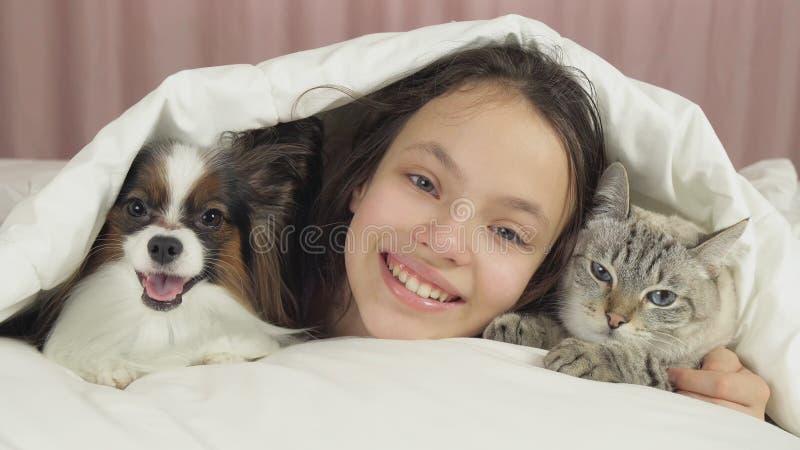 愉快的青少年的女孩与狗Papillon和泰国猫在床上沟通 库存图片