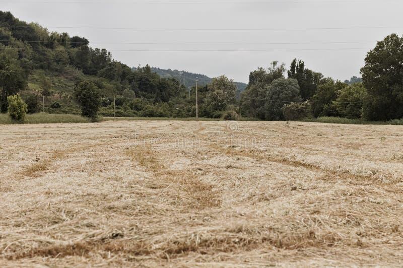 意大利、欧洲农用小麦收成后田 库存图片