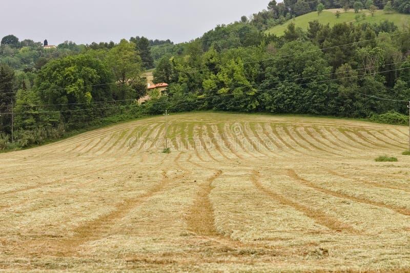 意大利、欧洲农用小麦收成后田 免版税图库摄影