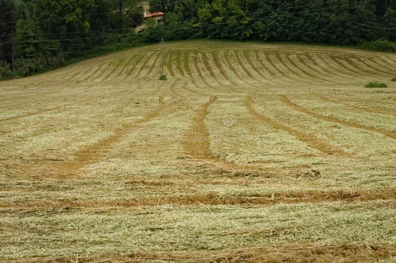 意大利、欧洲农用小麦收成后田 免版税库存图片