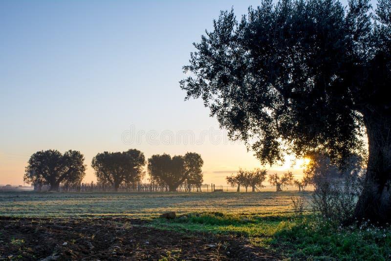 意大利乡下风景的水平的看法在日出W的 库存图片