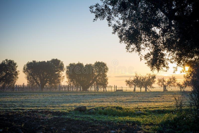 意大利乡下风景的水平的看法在日出W的 免版税图库摄影