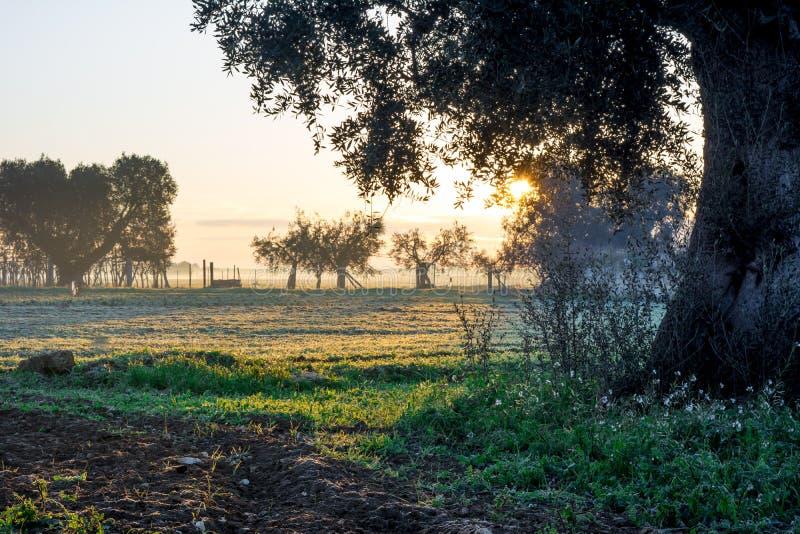 意大利乡下风景的水平的看法在日出W的 库存照片
