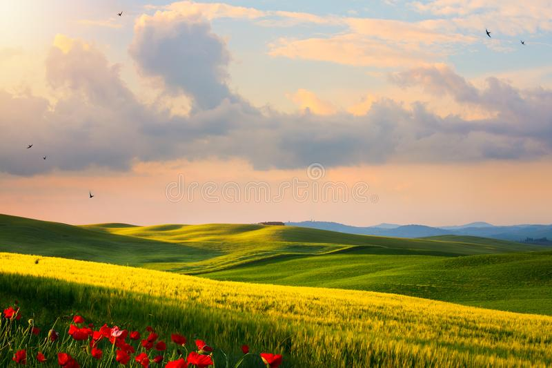 意大利乡下风景;在托斯卡纳小山的日落 免版税库存图片