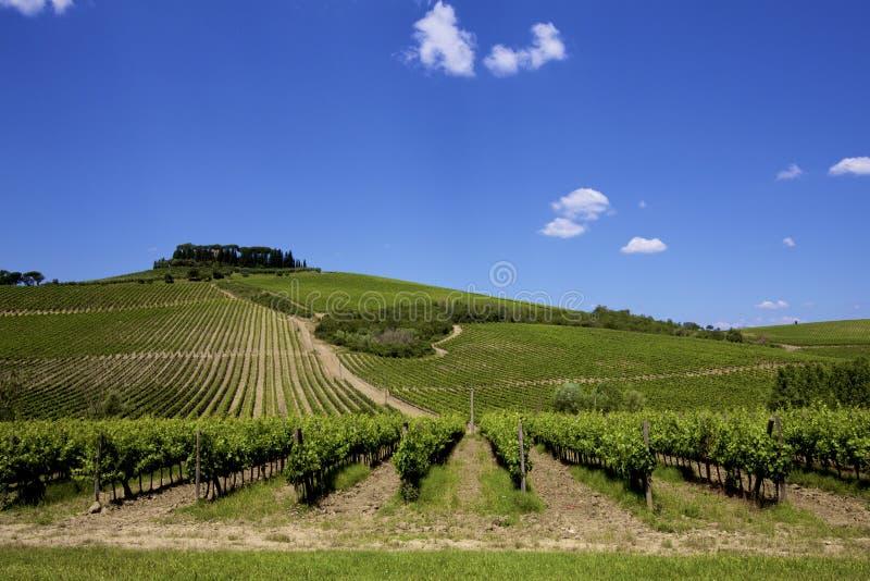 意大利人托斯卡纳酒葡萄园 免版税库存图片