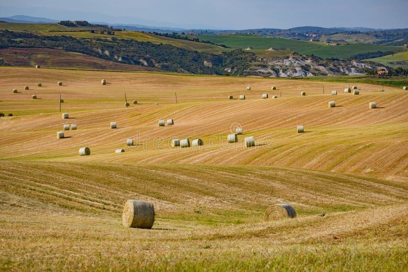 意大利托斯卡纳,欧洲,一捆捆稻草在收割的田地上 免版税库存照片