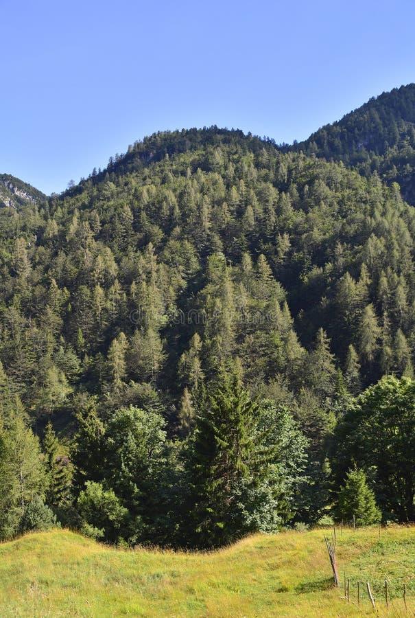 图片 包括有 组塑, 朱利安, 森林, 倾斜, 无云, 威严的, 巴尔干