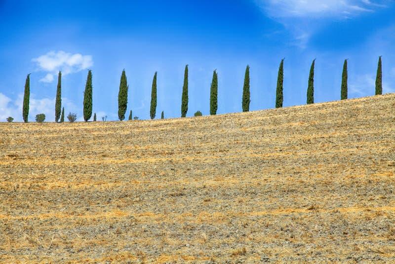 意大利柏树行和黄色领域农村风景,图斯 免版税库存照片