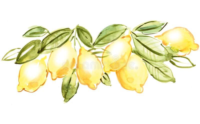 意大利柠檬 皇族释放例证