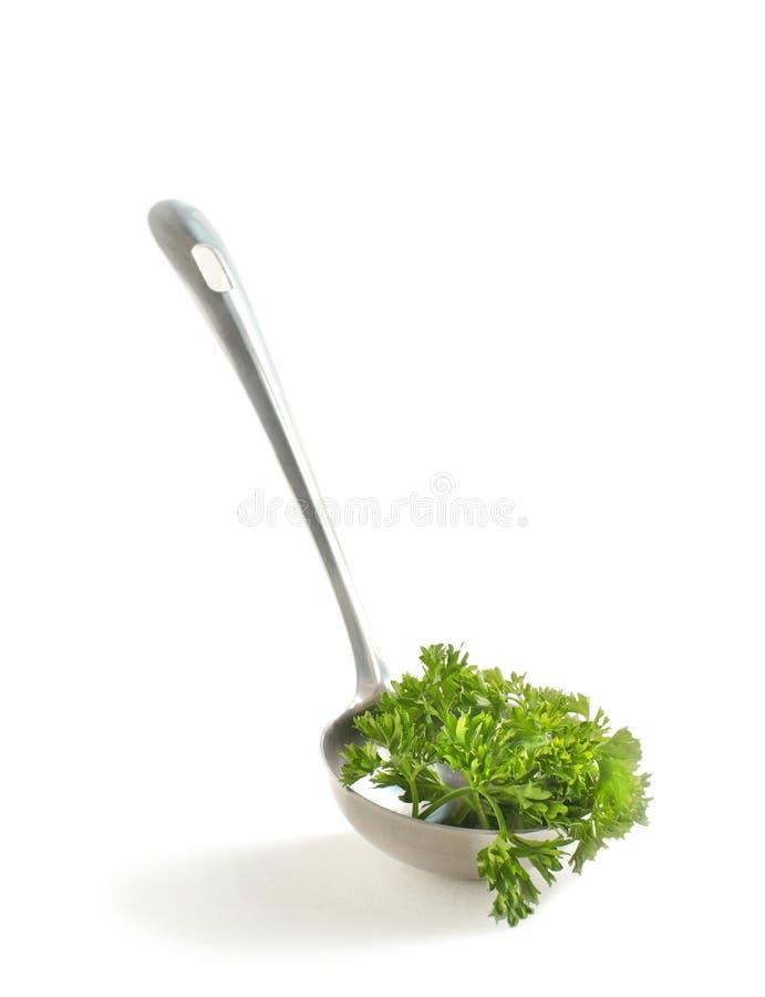 意大利欧芹绿色叶子在汤杓子的 图库摄影
