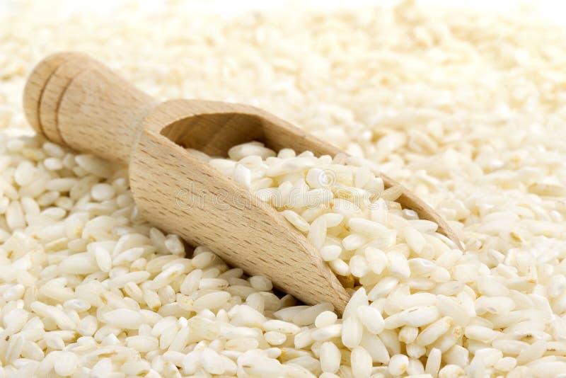 意大利煨饭米 库存图片