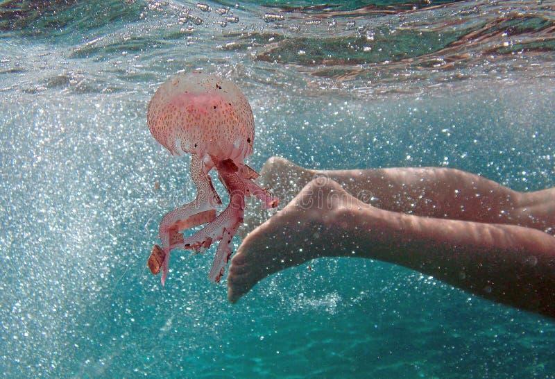意大利男孩游泳在海偶然地接触一只水母 库存照片