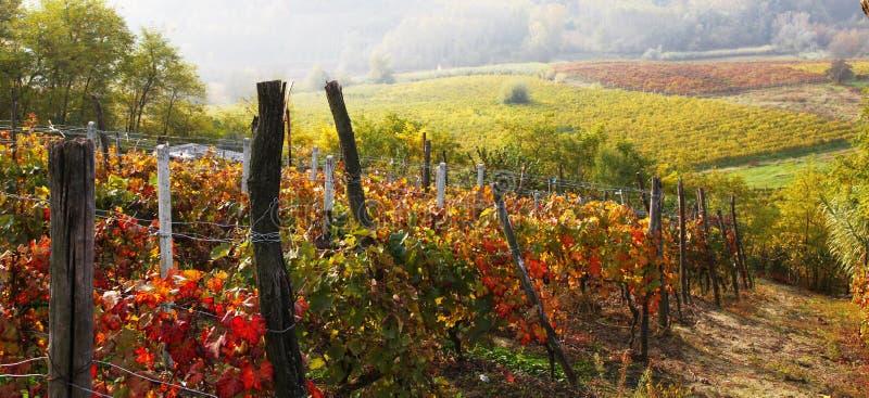 意大利葡萄园秋天风景  图库摄影
