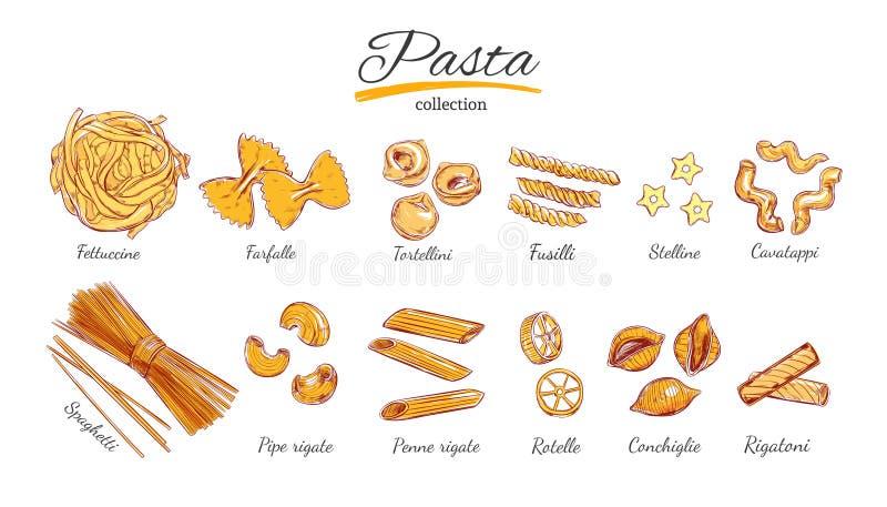 意大利面团集合 意大利面食的不同的类型 向量手拉的例证 在白色的被隔绝的对象 五颜六色 皇族释放例证
