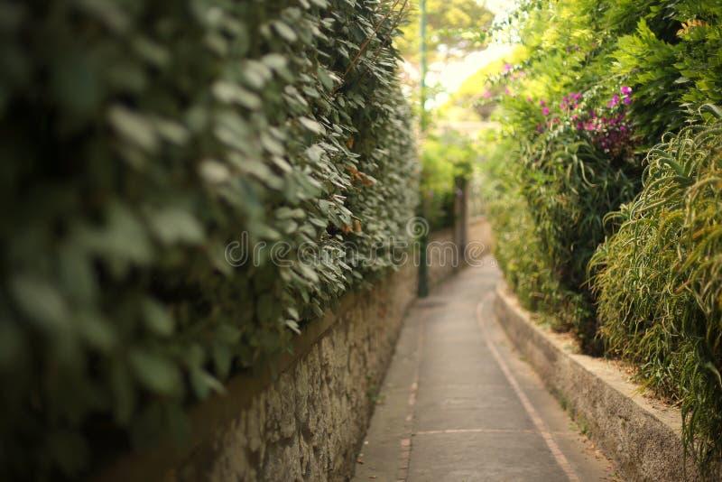 意大利绿色路 免版税库存图片