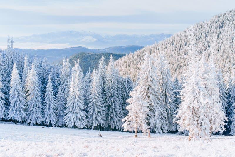 意想不到的冬天风景 在山的不可思议的日落每冷淡的天 在假日的前夕 剧烈的场面 库存图片