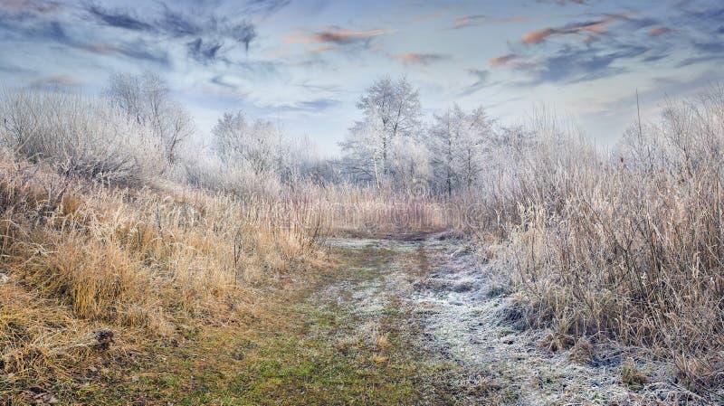 意想不到的冷淡的lanscape在森林里 库存图片