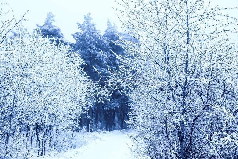 意想不到的圣诞节神奇路通过多雪冻结的冬天 库存照片