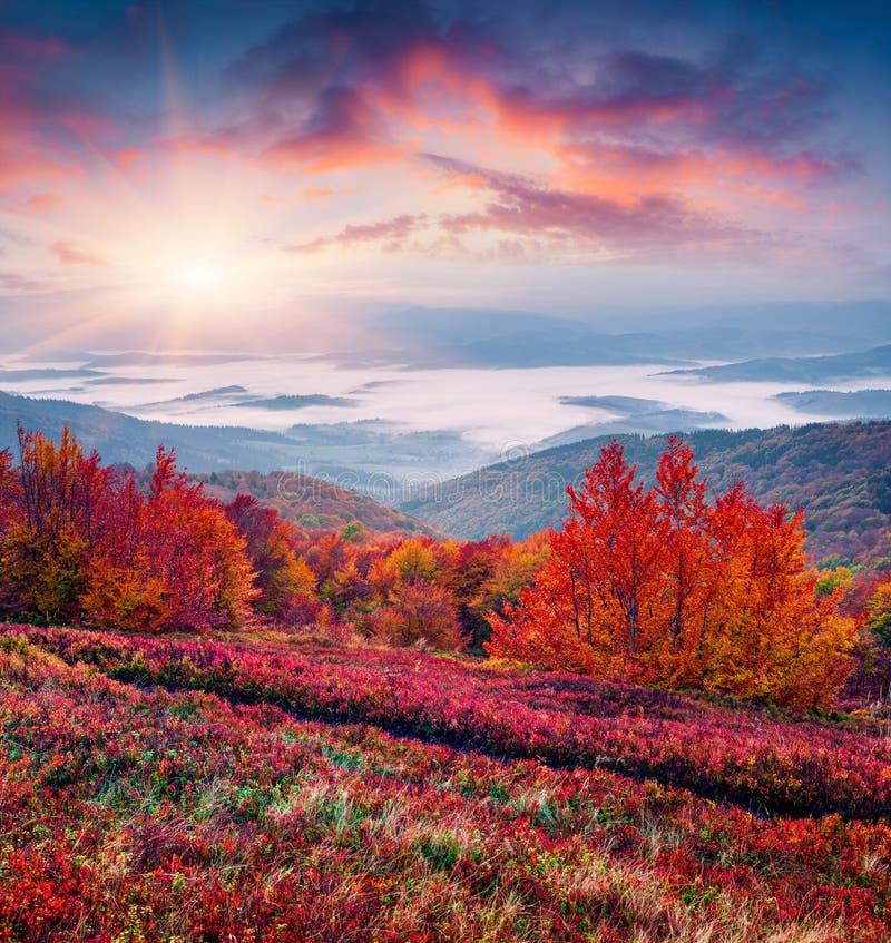 意想不到的颜色秋天风景在喀尔巴汗 免版税库存图片
