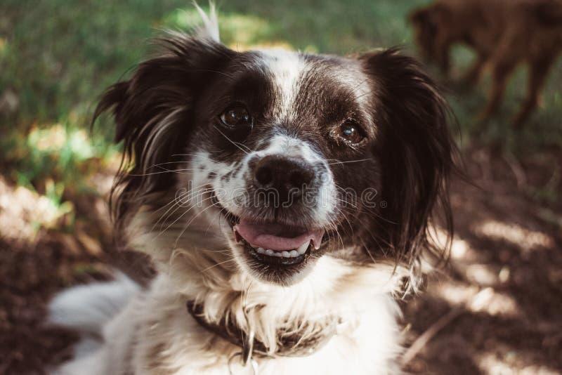 愚蠢的狗面孔 免版税库存照片