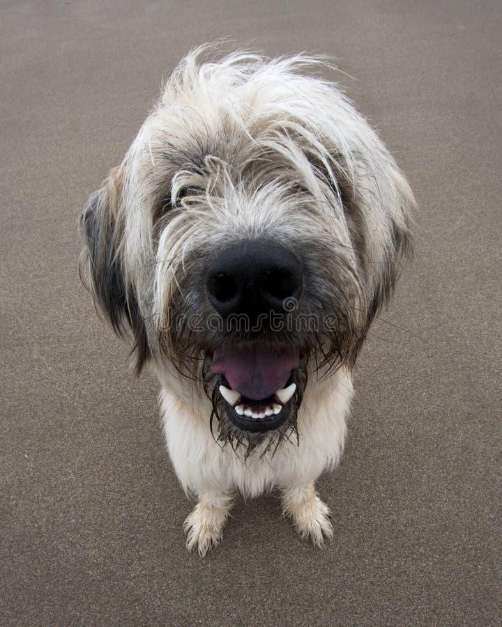 愚蠢的狗 免版税图库摄影