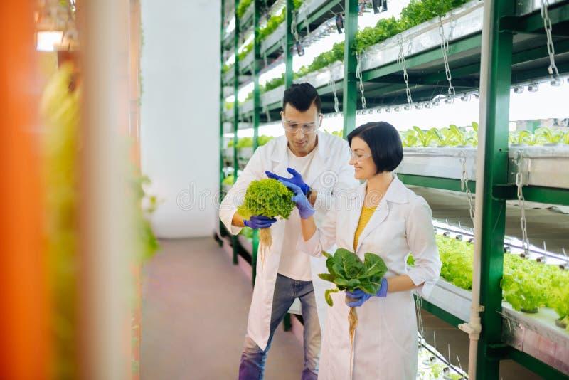 感到的农业学家快乐,当工作自温室时 库存照片