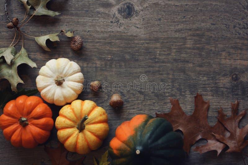 感恩季节静物画用五颜六色的小南瓜、橡子南瓜和秋天离开在土气木背景 库存照片