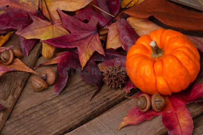 感恩或万圣节静物画场面与五颜六色的秋天叶子和一个微型南瓜在土气木委员会桌上与拷贝空间 免版税库存图片
