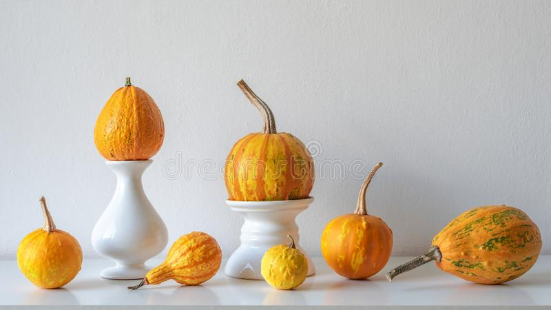 感恩装饰 最小的秋天启发了室装饰 各种各样的南瓜的选择在白色架子的 库存图片