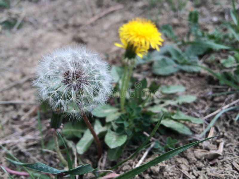 愿望的花! 图库摄影